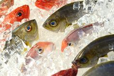 Best (health, environment) fish to eat: wild salmon from alaska, farmed/wild arctic char, wild mackerel, sardines, wild sablefish, anchovies, farmed oysters, farmed rainbow trout, US caught wild albacore tuna, farmed mussels, wild pacific halibut