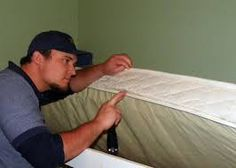 Great Chandler Bed Bug Extermination
