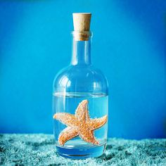 starfish in a flask