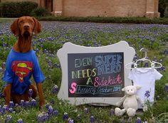 Every superhero needs a sidekick! #BabyCenterBlog #PregnancyAnnouncements