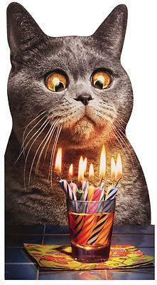 Happy birthday more. happy birthday more cat birthday wishes, happy birthday funny Funny Happy Birthday Pictures, Happy Birthday Funny, Happy Birthday Greetings, Funny Birthday Cards, Humor Birthday, Happy Birthday Cat Images, Happy Birthday Country, Birthday Quotes Funny For Him, Birthday Humorous