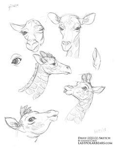 Daily_Animal_Sketch_173
