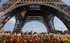 Paris in Spring. #budgettravel #travel #Paris #France #EiffelTower #flowers #art #architecture #spring #beautiful #inspiration #tips BudgetTravel.com