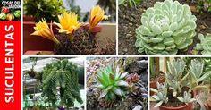 Las plantas suculentas son las plantas perfectas para los jardineros olvidadizos. El cuidado suculento es fácil, y los jardines y … Air Plants, Diy And Crafts, Planters, Entertaining, Mini Gardens, Blog, Ideas, Google, Gardens