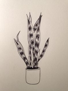 Sanseveria  drawing by @evapieters