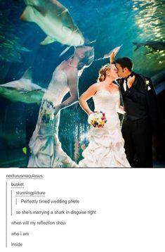 funny aquarium wedding photos shark photobomb