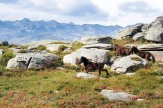 Peneda-Gerês National Park | The 19 Best Places to Visit in Portugal