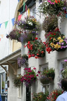 Padstow, Cornwall  One of the things I loved about England was the way everyone decorated everything, from their homes to shops to pubs, with flowers.