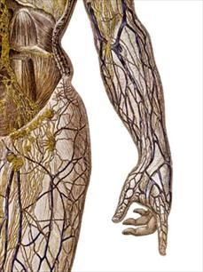 Inside the Human Body - Healthy Living Center - Everyday Health