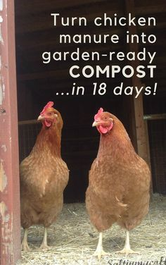 This is my favorite method to turn the deep litter from our chicken barn into safe, garden-ready compost in just 18 days!