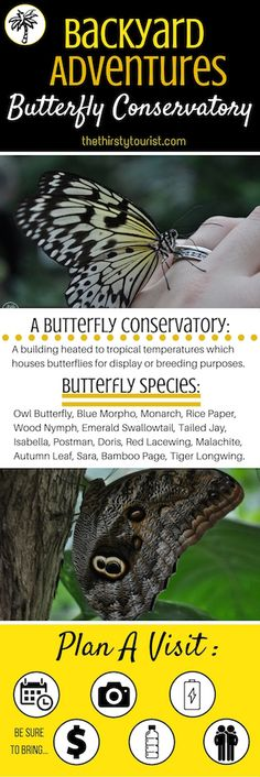 The Thirsty Tourist's Backyard Adventure Crib Sheet for a Butterfly Conservatory. Butterfly Species, Wood Nymphs, Summer Bucket Lists, Conservatory, Crib, Backyard, Adventure, Travel Tips, Community