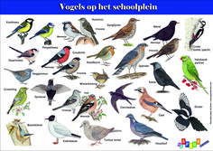 Archívy knihy - Page 4 of 6 - MonteMother Science For Kids, Science Nature, Educational Crafts, Bird Theme, Tree Tops, Fauna, Wild Birds, Creative Kids, Bird Watching