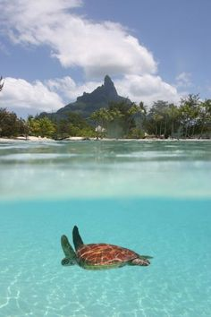 I wish to visit Tahiti one day. Tahiti Bora Bora - will be thinking of being here next time I;m cold at work! Dream Vacations, Vacation Spots, Top Vacations, Vacation Ideas, Vacation Places, Romantic Vacations, Italy Vacation, Vacation List, Mexico Vacation