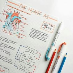 The heart is probably one of my favourite topics in biology – what's yours? – … The heart is probably one of my favourite topics in biology – what's yours? Nursing School Notes, College Notes, Cute Notes, Pretty Notes, Study Biology, Biology Revision, Science Notes, Chemistry Notes, Study Chemistry