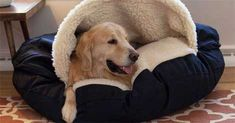 Keeping Warm: Winter Dog Bed and Blankets #dogbed #dogs #winter #cozy #keepingwarm #petcare #petlove #doglove #dog #petparent
