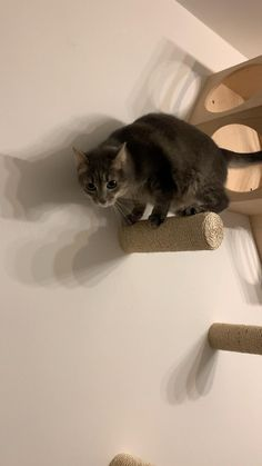 Cat Climbing Shelves, Cat Climbing Wall, Cat Wall Shelves, Cat Wall Furniture, Modern Cat Furniture, Gifts For Cats, Cat Stairs, Nebelung, Cat Exercise