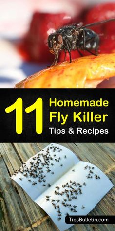 Rose Bush Care - So That You Can Have The Top Rose Bushes Homemade Fly Killer Recipes: 11 Natural Tips For Killing Flies Fly Deterrent, Fly Repellant, Insect Repellent, Flies Repellent Outdoor, Homemade Fly Traps, Homemade Fly Spray, Fly Control, Pest Control, Tips And Tricks