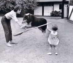 An unknown collie dog jumps a broom with Jackie Kennedy and daughter Caroline, circa (Mark Shaw) Mrs Kennedy, Jaqueline Kennedy, Caroline Kennedy, Jacqueline Kennedy Onassis, Sweet Caroline, Rough Collie, Collie Dog, John Fitzgerald, Jfk