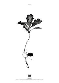 Norrgavel, Affischerna i serien Grow är inspirerade av fascination för naturens skönhet, som hur ett träd växer sig starkt och hur allting kodas i kärnan så som form
