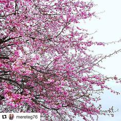 The colors of spring. #reiseliv #reisetips #reiseblogger #reiseråd  #Repost @mereteg76 with @repostapp  Happy Easter