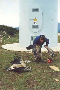 How many birds killed by wind power