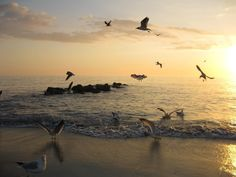 caspersen beach venice florida | Sunset at Caspersen Beach, Venice Florida (Shark Tooth Capital of the ...