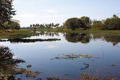 """Conhece Corumbá? A chamada """"capital do Pantanal"""" está localizada às margens do rio Paraguai. Corumbá é uma cidade portuária e cheia de história, um destino recomendado para quem gosta de pescar e admirar a natureza. Ainda no caminho, é possível ver uma prévia da fauna exuberante – além dos pássaros, jacarés descansam nos alagados, bandos de capivaras correm. Corumbá faz fronteira com a Bolívia e possui um significativo patrimônio histórico. #MTur #Brasil #Cuiabá #conhecaobrasil"""