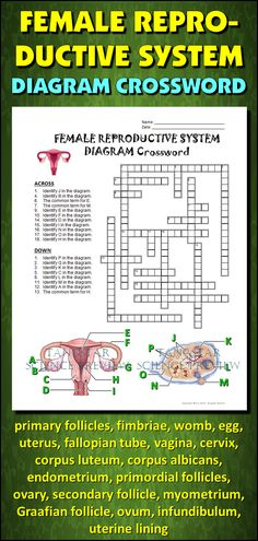 Help students learn and remember the parts female reproductive system using this diagram crossword.  BONUS ACTIVITY:  When they've completed the crossword, get them to cut out the diagram, glue it on a separate page and label the parts of the diagram.  This activity would work wonderfully within an interactive notebook as well. It can function as an assessment of learning, or it can serve as another reinforcement activity. Afterwards, they have a handy labeled diagram to help them review.
