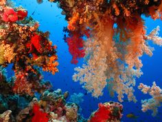 coral, corals, coral reef, reef, coralli, barriera corallina, under the sea, abissi, abiss, colour, wonderful, mare, oceano, ocean, sea life, fondale, marino, fondale marino