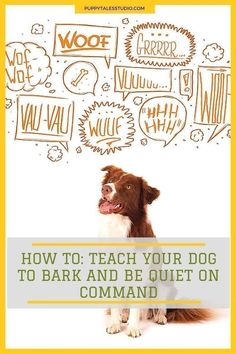 HOW TO: Teach your dog to bark & be quiet on command. It's a fun and easy trick to keep your dog mentally fit. Click through to learn more about this fun and engaging dog trick or repin and save for later! #easydogtricks #dogtricks #teachdog