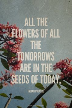 All the flowers of all the tomorrows are in the seeds of today. - Indian Proverb