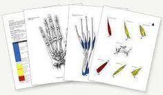 Anatomy Clings/Hand therapy products