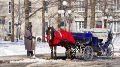 L'hiver à Québec Snow, Outdoor, Winter, Outdoors, Outdoor Games, Human Eye