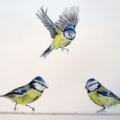 Delightful blue tit wall decals new in store :)