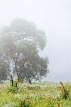 Misty meadow - free stock photo