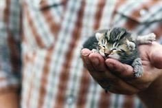Look how peaceful the kitty looks! Aww.. :D