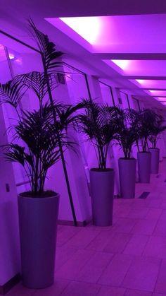 Vaporwave | Interior | Palms | Purple