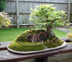 Bem Legaus! Bonsai do Hobbit. =]