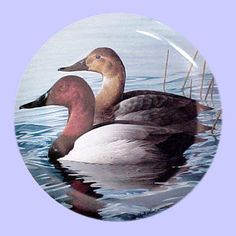 American Waterbirds: Canvasbacks - Hamilton Collection - Artist: Rod Lawrence