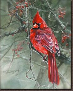 Red' - a painting by Kim Diment Pretty Birds, Beautiful Birds, Christmas Paintings, Christmas Art, Bird Pictures, Pretty Pictures, Cardinal Birds, Bird Drawings, Watercolor Bird