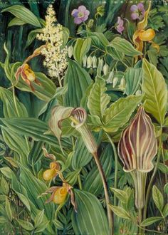 Wild Flowers from the Neighbourhood of New York by Marianne North; 1871; Oil on board; Collection: Royal Botanic Gardens, Kew, England