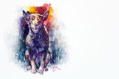 Red dog - Australian Kelpie Study. Graphite and oils on prepared sheet of Yupo...