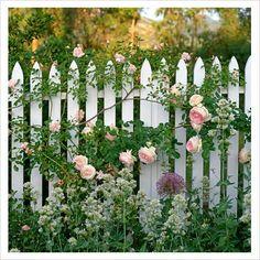 Gardening Roses 40 Admirable Eden Rose Garden To Enhance Your Beautiful Garden Fence Landscaping, Backyard Fences, Garden Fencing, Pink Garden, Dream Garden, Shade Garden, Rose Cottage, Cottage Style, White Cottage