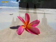 Μια καλημέρα .Χαρούλα Αλεξίου - YouTube Youtube, Videos, Youtubers, Youtube Movies
