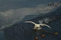 Ruchliwe ptactwo i jak je zamrozić na zdjęciach | Pejzażownia