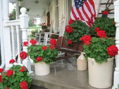I love love love red geraniums and our beautiful flag combo.