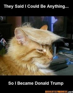 I became the Donald, with a bigger brain.