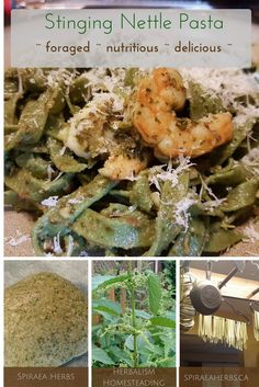 Stinging Nettle Pasta - foraged, nutritious and delicious | Spiraea Herbs