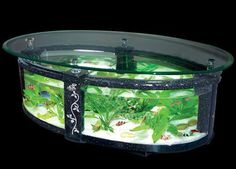 Google Image Result for http://image.made-in-china.com/2f0j00BewQWkJSPvum/Glass-Tea-Table-Aquariums-Decorative-Fish-Tank-1-1m-0-5m-0-53m-.jpg