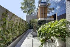 RIMA Arquitectura designed the concrete Bacatete House in Mexico City as its own environment with gardens offering an escape from the city. Steel Columns, Exposed Concrete, Concrete Houses, Building Materials, Pathways, Ground Floor, Nice View, Indoor Outdoor, Architecture Design